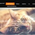 kattförsäkring